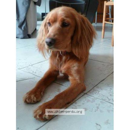 centrale canine toulon
