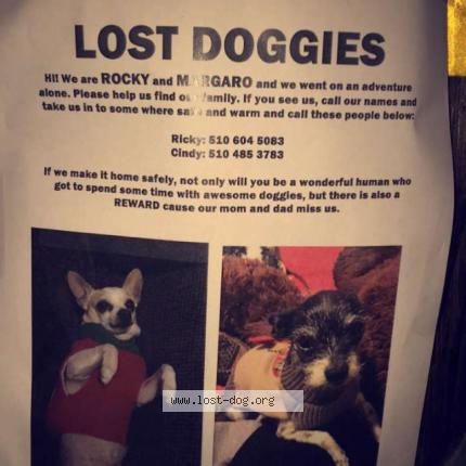 "Dog Lost on 12/04/2017 - ""Rocky"""