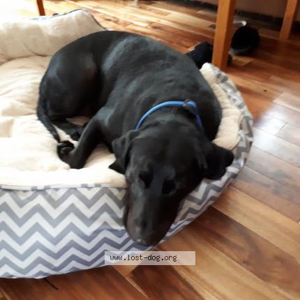 Dog Found on 11/28/2017