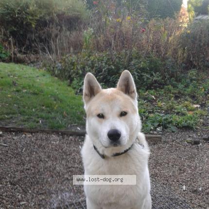 """Dog Lost on 06/12/2017 - """"Zeus"""""""