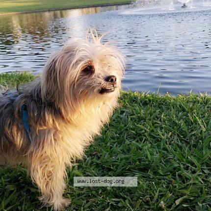 "Dog Lost on 01/11/2018 - ""Tiny"""