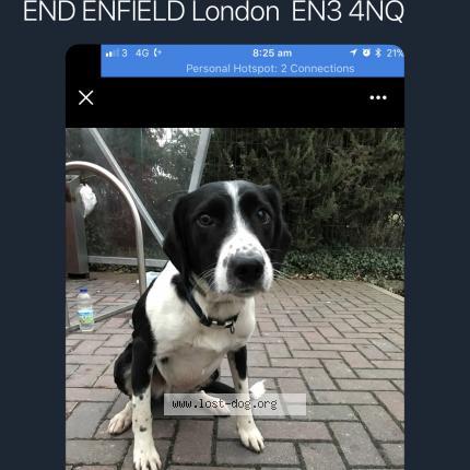 Dog Found on 01/13/2018