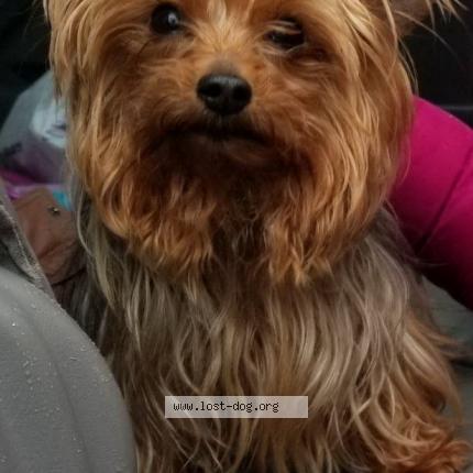 "Dog Lost on 04/14/2018 - ""Maya"""