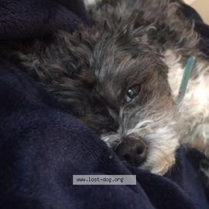 """Dog Lost on 04/15/2018 - """"Pepper"""""""