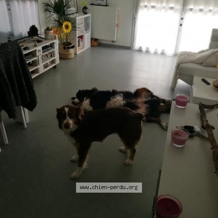 207222 mona chien perdu et retrouv clermont ferrand chien perdu france. Black Bedroom Furniture Sets. Home Design Ideas