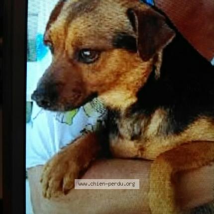 centrale canine chien perdu