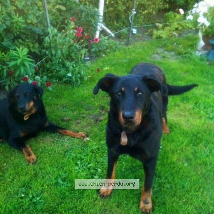 225438 cassis chien perdu cheret bruyere et montberault chien perdu france. Black Bedroom Furniture Sets. Home Design Ideas