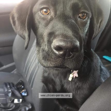 226131 niska chien perdu combles en barrois chien perdu france. Black Bedroom Furniture Sets. Home Design Ideas