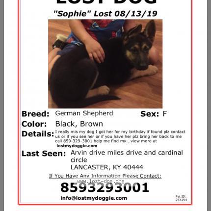 """Dog Lost on 08/14/2019 - """"Sophie"""""""