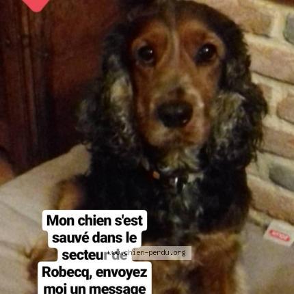 """Chien Perdu le 14/08/2019 - """"Ginie"""""""