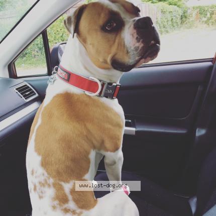 "Dog Lost on 08/15/2019 - ""Cash"""