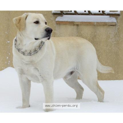 Staffie bull terrier chien amoureux animal mesdames Cadeau T-Shirt Taille S-XXL