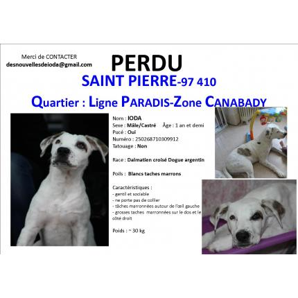 centrale canine l'hay les roses